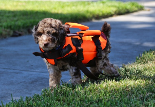 ryder-lifejacket-2